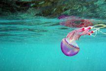 jellybellyfish / by MacKenzie