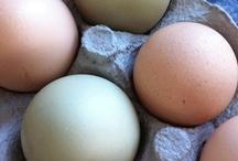 Höns / Inspirerande om höns och ägg