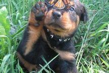 Cute,!!!!!