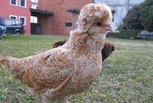 Paduan Hen