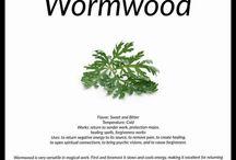 Worm Wood herb