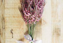 Flores y plantas que me gustan