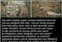 aslan yürekli olmak