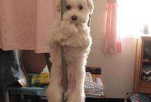 Pole dance pets ;) / Pole dance i zwierzaki, to się łączy!