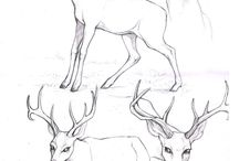Sketch; Animals