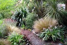 Ideas for our garden / Nz native