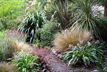 Ideas for our garden / Nz native