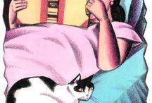 DG Book&Cat