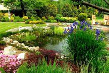 Ogród z elementami w stylu japońskim