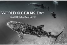 Ocean Conservation / Anything to do with oceans, sea life and anything that lives in water.