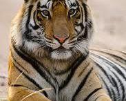 Voyage Centre de l'Inde – Tigres et Temples | Tour Opérateur en Inde, Spécialiste voyage en Inde et Népal