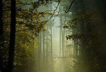 natura zdjęcia