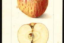 Frutta dipinta