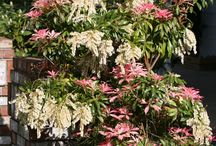 Flowers & Edibles / Plants that thrive in many San Francisco gardens