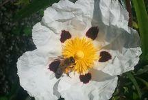BOTANICA / Talleres teórico-prácticos para aprender a Identificar flores y  plantas www.vidasalvaje.net