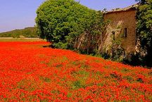 Exploring the charming Provence