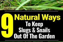 gardening natural sprays for insects & bugs
