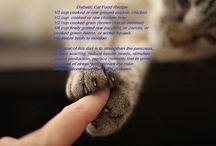 HEALTHY  Pet - Cats / by Bea Rud