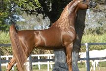 horses/stable stuff