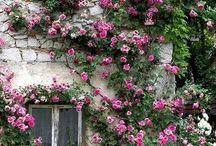 Beautifull windows