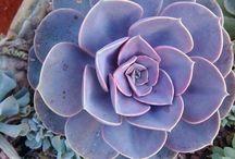 Suculentas y Cactus.