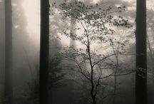 Silence / by Sean Ablett