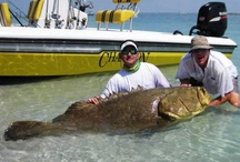 Sanibel Island Fishing / by Casa Ybel Resort