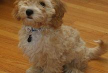 Puppy / Hond