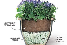 Plants: Inside Plants