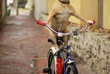 Dog Talents