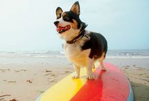 pet-friendly destinations / Your favorite furry friends are welcome to hang out by your side at these cities, parks, restaurants and beaches.