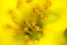 yellow / by SimonaRizzo Photography
