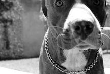 Animals | Dog