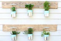 tin plants