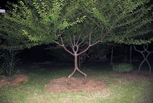 L'arbre sous toutes les coutures