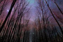 Photographyy / by Stefanie Hughes
