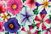 Flores / Inspirações