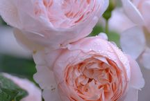 Gardens & flower / Music