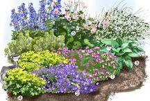 Parre terre fleurie jardin