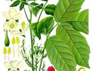 Botanical Drawings / Botanical Drawings