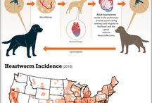 Heartworm Disease / Heartworm disease is a serious and potentially fatal disease in pets in the United States and many other parts of the world. It is caused by foot-long worms (heartworms) that live in the heart, lungs and associated blood vessels of affected pets, causing severe lung disease, heart failure and damage to other organs in the body.