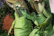 Green Iguana Care / The best guide about Green Iguana Care
