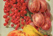 фрукты, овощи картинки