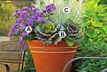 Flowers and plants / Flower arrangments, plant caring and patio gardening