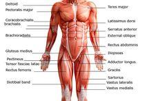 anatómia / anatomy