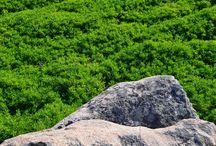 La Maddalena (Sardinia) - Rock and vegetation
