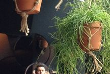 Plants & Flowers bij Menno