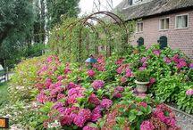 tuin in landelijke stijl / De strakke belijning wordt wat romantischer en weelderiger afgezoomd. Duurzame houten meubels, een prieel, klassieke beelden of een zonlichtfilterend bladerdak als terrasoverkapping.  Als het maar bijdraagt aan het lommerijke en landelijke karakter.