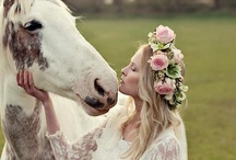 Horses Photography