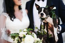 Clewell Photography: Dogs at weddings